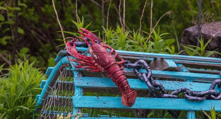 Die neuen Funktionen von Lobster_pim