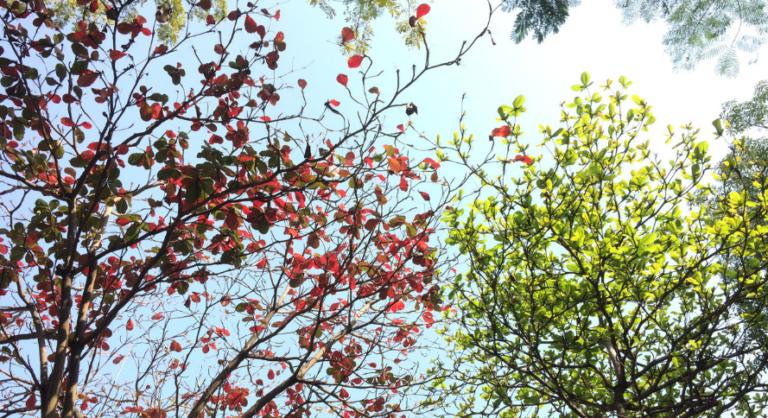 Migration auf Acrobat DC – Jetzt ist der perfekte Zeitpunkt