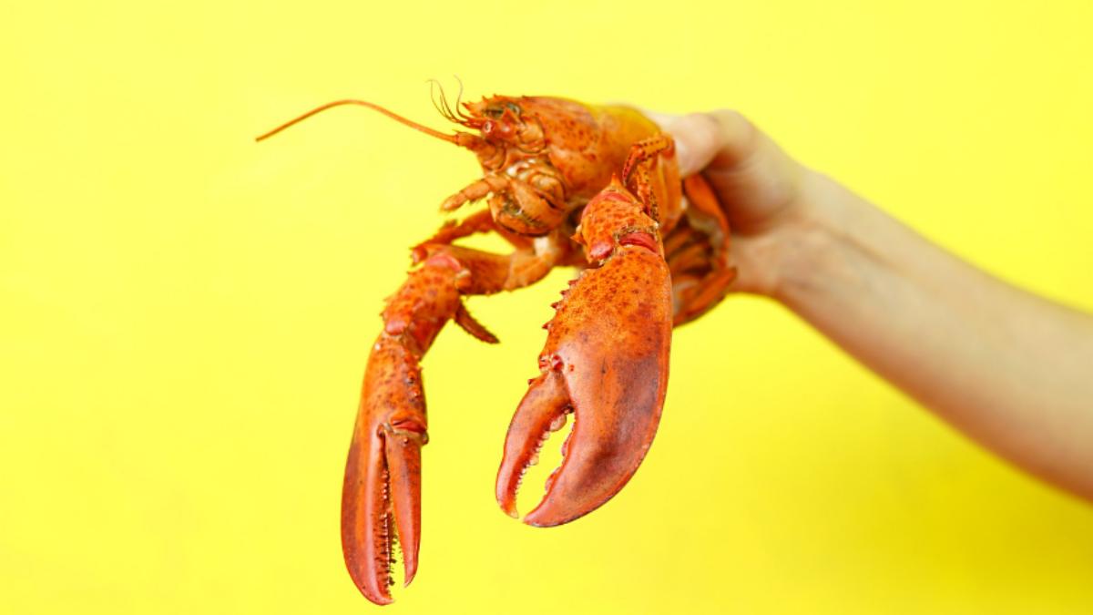 Neues bei Lobster_pim